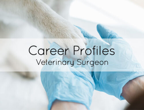 Career of the month: Veterinary Surgeon